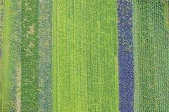 Campos de Cabagge - vista aérea foto de stock royalty free