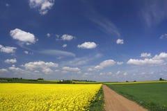 Campos de Canola e céu azul Imagens de Stock