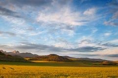 Campos de cereal amarillos en la puesta del sol. Luz y cielo hermosos Imagenes de archivo
