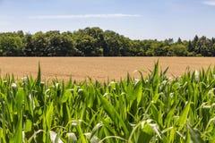 Campos de cereales foto de archivo libre de regalías