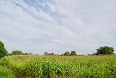 Campos de Cheshire foto de archivo