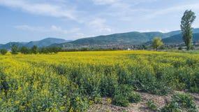 Campos de cultivo amarillos Fotografía de archivo libre de regalías
