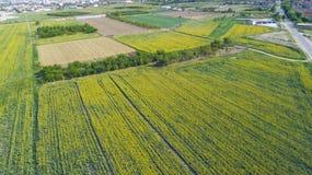 Campos de cultivo amarillos Imagen de archivo