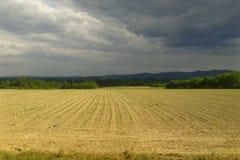 Campos de cultivo foto de stock