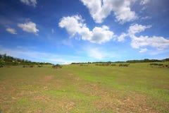Campos de cultivo verdes em montes Imagens de Stock