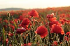 Campos de Dorset Foto de Stock Royalty Free