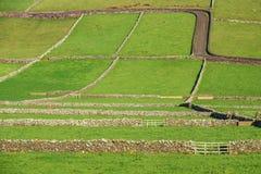 Campos de exploração agrícola com as paredes de pedra na ilha de Terceira em Açores Fotografia de Stock Royalty Free