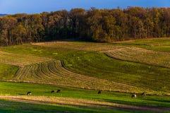Campos de exploração agrícola e Rolling Hills do Condado de York do sul, Pennsylva foto de stock royalty free