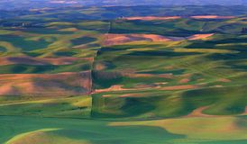 Campos de exploração agrícola em Washington oriental Imagens de Stock Royalty Free