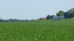 Campos de exploração agrícola verdes Fotografia de Stock Royalty Free