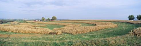 Campos de exploração agrícola do rolamento, Imagem de Stock