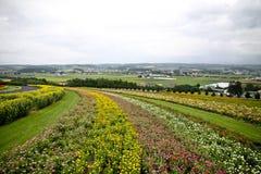Campos de flor Imagem de Stock
