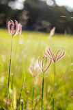 Campos de flor Imagem de Stock Royalty Free