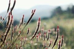 Campos de flor Imagens de Stock