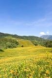 Campos de flor bonitos do lírio em Hualien, Taiwan Fotos de Stock Royalty Free