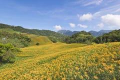 Campos de flor bonitos do lírio em Hualien, Taiwan Imagem de Stock