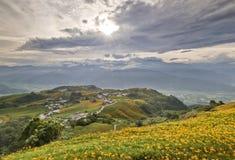 Campos de flor bonitos do lírio em Hualien, Taiwan Imagens de Stock Royalty Free