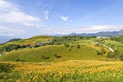 Campos de flor bonitos do lírio em Hualien, Taiwan Fotografia de Stock