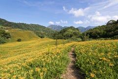 Campos de flor bonitos do lírio em Hualien, Taiwan Fotos de Stock