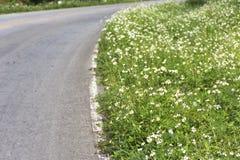 Campos de flor com opinião da borda da estrada na noite Imagem de Stock Royalty Free