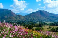 Campos de flor con la montaña y el cielo azul Imagenes de archivo