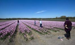 Campos de flor en Holanda Fotografía de archivo libre de regalías