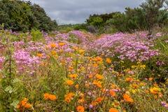 Campos de flores Fotos de archivo libres de regalías
