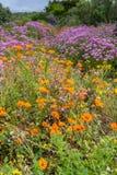 Campos de flores Imágenes de archivo libres de regalías