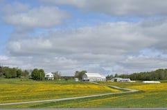 Campos de flores amarillos en primavera Foto de archivo libre de regalías