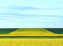 Campos de florescência fotos de stock
