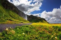 Campos de florescência maravilhosos Fotos de Stock Royalty Free