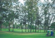 Campos de golfe bonitos com árvores e férias do feriado fotografia de stock
