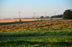 Campos de grão Alberta Canada foto de stock royalty free