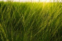 Campos de grama Foto de Stock