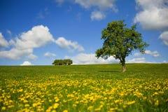 Campos de grama com árvore e nuvens no céu Imagem de Stock Royalty Free