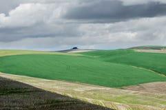 Campos de granja agrícolas con trigo verde Fotos de archivo libres de regalías