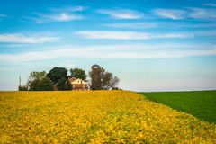 Campos de granja en el condado de Lancaster rural, Pennsylvania Imagenes de archivo