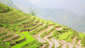 campos de granja magníficos, terrazas del arroz de arroz, Sapa, Vietnam metrajes