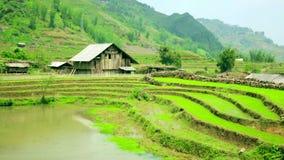 campos de granja magníficos, terrazas del arroz de arroz, Sapa, Vietnam almacen de metraje de vídeo