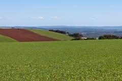 Campos de granja ondulados Foto de archivo libre de regalías