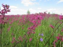 Campos de granja ucranianos del paisaje de los Wildflowers foto de archivo libre de regalías