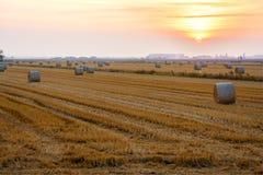Campos de grano en verano tardío, después de cosechar fotos de archivo libres de regalías