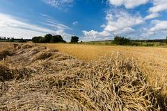 Campos de grano de maduración fotografía de archivo