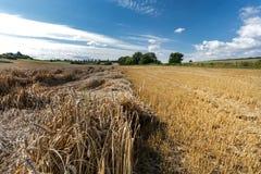 Campos de grano de maduración imagenes de archivo