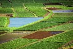 Campos de la agricultura fotografía de archivo libre de regalías