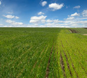 Campos de la agricultura del resorte foto de archivo libre de regalías