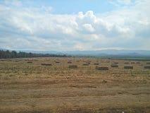 Campos de la alfalfa Fotografía de archivo libre de regalías