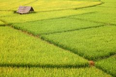 Campos de la choza y del arroz Imagenes de archivo
