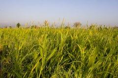 Campos de la cosecha Foto de archivo libre de regalías
