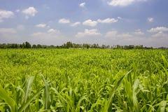 Campos de la cosecha Foto de archivo